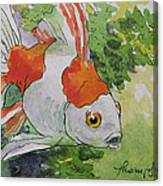 Friendly Fantail Tiny Goldfish Painting Canvas Print