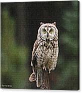 Friendly Owl In The Forest Canvas Print