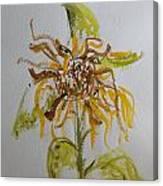 Friendly Sunflower Canvas Print