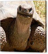 Friendly Tortoise Canvas Print