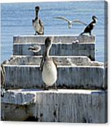 Pelican Friends Canvas Print