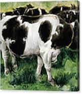 Friesian Cows Canvas Print