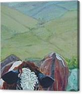 Friesian Holstein Cows Canvas Print
