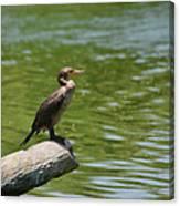 Frigate Bird Watching Estuary Canvas Print