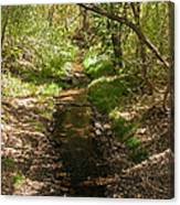 Frijole Creek Bandelier National Monument Canvas Print