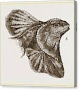 Frilled Lizard Canvas Print