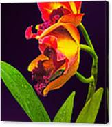 Frilly  Red And Yellow Orchids Canvas Print