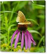 Fritilarie Butturfly On Purple Cone Flower Canvas Print