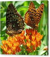 Fritillaries  Canvas Print