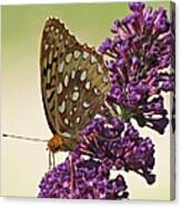 Fritillary Butterfly On Buddleia Canvas Print