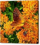Fritillary On Butterfly Weed Canvas Print