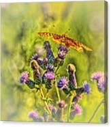 Fritillary On Thistle Canvas Print