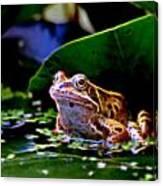 Frog 2 Canvas Print