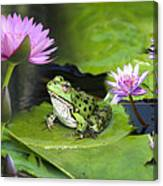 Frog And Water Lilies Canvas Print