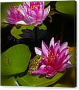 Frog And Water Lily Canvas Print
