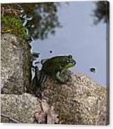 Frog At Edge Of Pond Canvas Print