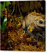 Frog In The Fall Canvas Print
