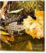 Frog In Water 3 Of 3 Canvas Print
