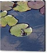Frog On A Lilypad Canvas Print