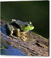 Frog On A Log Canvas Print