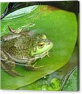 Frog On Lily Pad Photo Canvas Print
