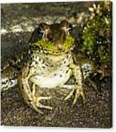 Frog Pose Canvas Print