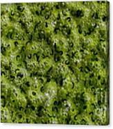 Frog Spawn Canvas Print