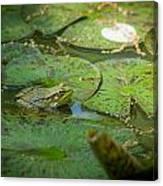 Froggy Bottom Canvas Print