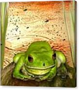 Froggy Heaven Canvas Print