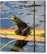 Froggy Reflections Canvas Print