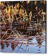 Froggy Sunset Canvas Print