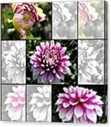 From Bud To Bloom - Dahlia Named Brian Ray Canvas Print