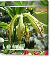 From Bud To Bloom - Gloriosa Named Rothschildiana Canvas Print