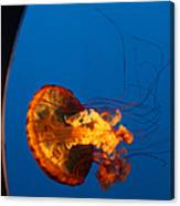 From The Deep - Jelly Fish Canvas Print