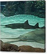 From The Deep - Sawtooth Ray Sharks Canvas Print