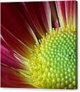 From The Florist Canvas Print