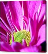From The Florist Too Canvas Print