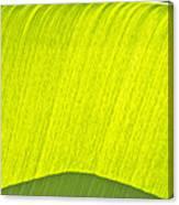 Fron Canvas Print
