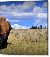 Frontview Of American Bison Canvas Print