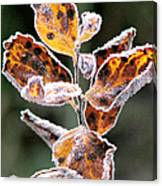 Frost Coated Canvas Print