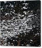 Frost Flakes On Ice - 30 Canvas Print