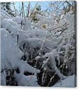 Frost Grass Canvas Print