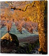 Frost In The Valley Of The Moon Canvas Print