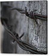 Frost On The Wire Canvas Print