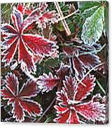 Frost On Wild Strawberry Canvas Print