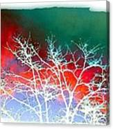 Frost Shrouded Tree Canvas Print