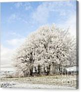 Frosted Copse Canvas Print