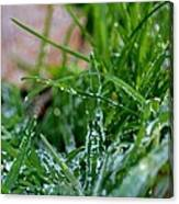 Frosted Dew Canvas Print