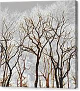 Frosted Forest Canvas Print