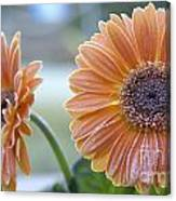 Frosted Gerberas Canvas Print